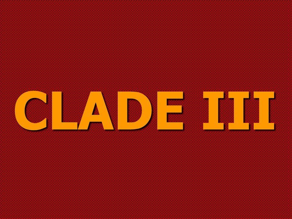 CLADE III