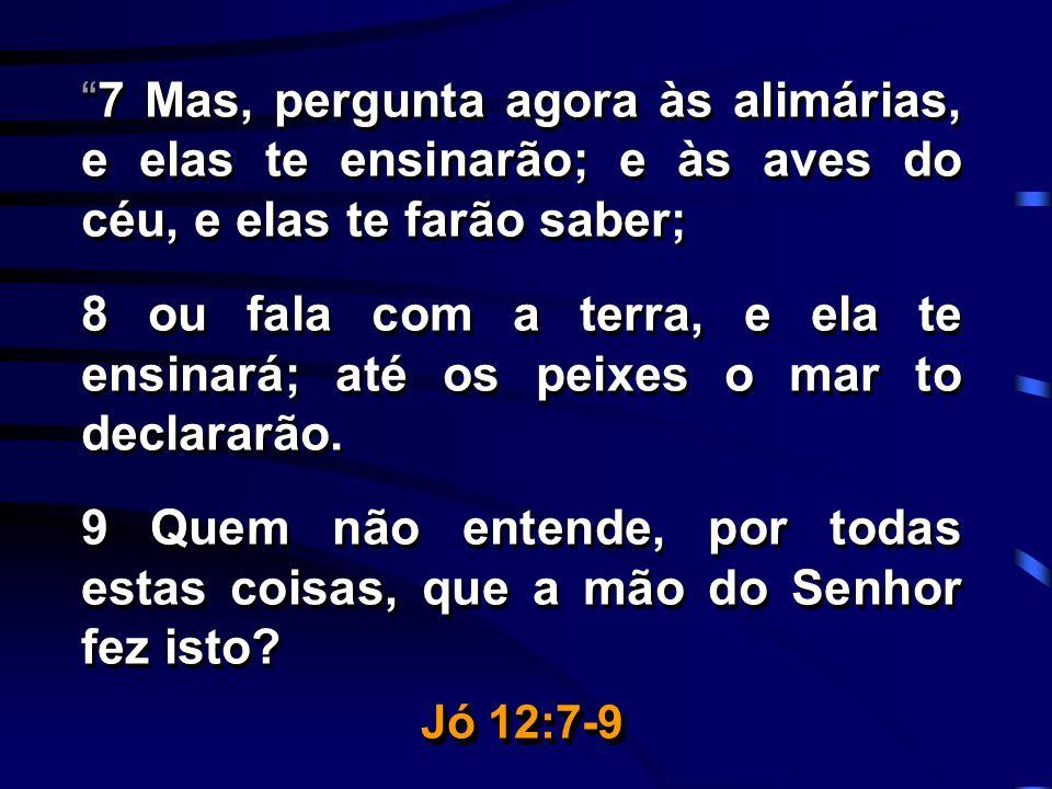 7 Mas, pergunta agora às alimárias, e elas te ensinarão; e às aves do céu, e elas te farão saber;