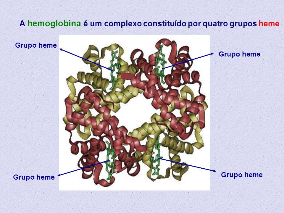 A hemoglobina é um complexo constituído por quatro grupos heme