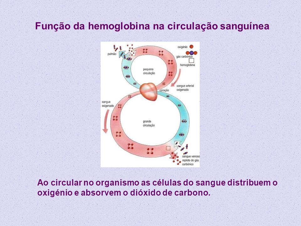 Função da hemoglobina na circulação sanguínea