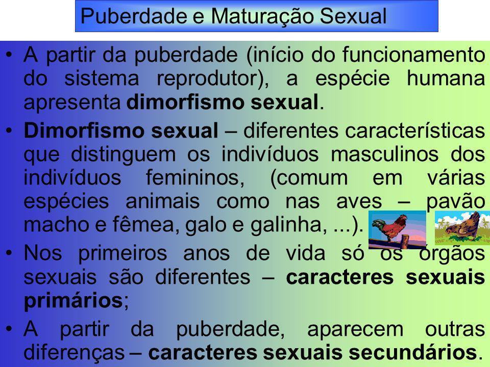 Puberdade e Maturação Sexual