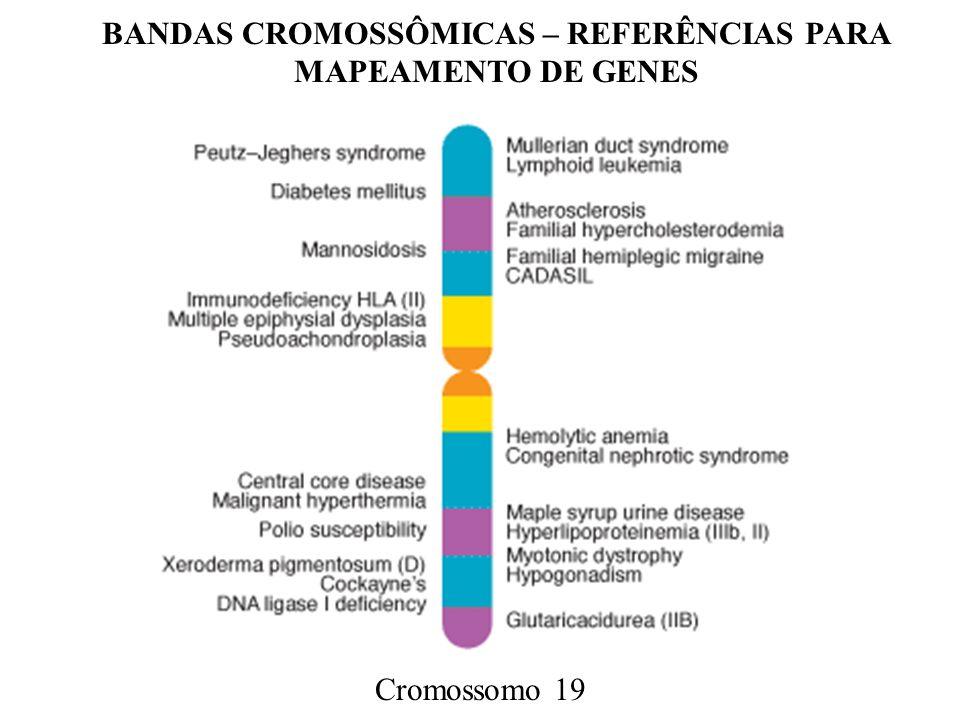 BANDAS CROMOSSÔMICAS – REFERÊNCIAS PARA MAPEAMENTO DE GENES