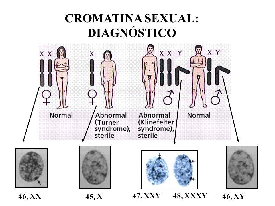 CROMATINA SEXUAL: DIAGNÓSTICO