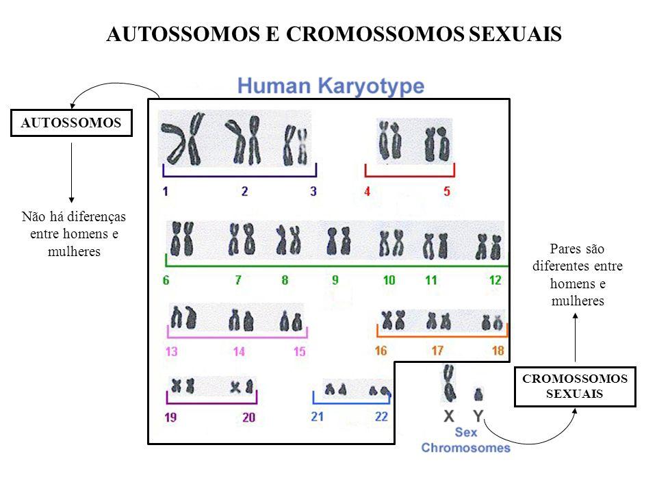 AUTOSSOMOS E CROMOSSOMOS SEXUAIS