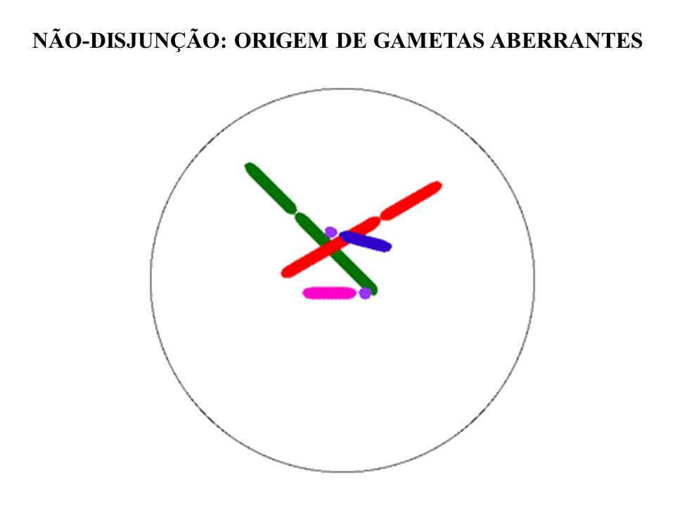 NÃO-DISJUNÇÃO: ORIGEM DE GAMETAS ABERRANTES