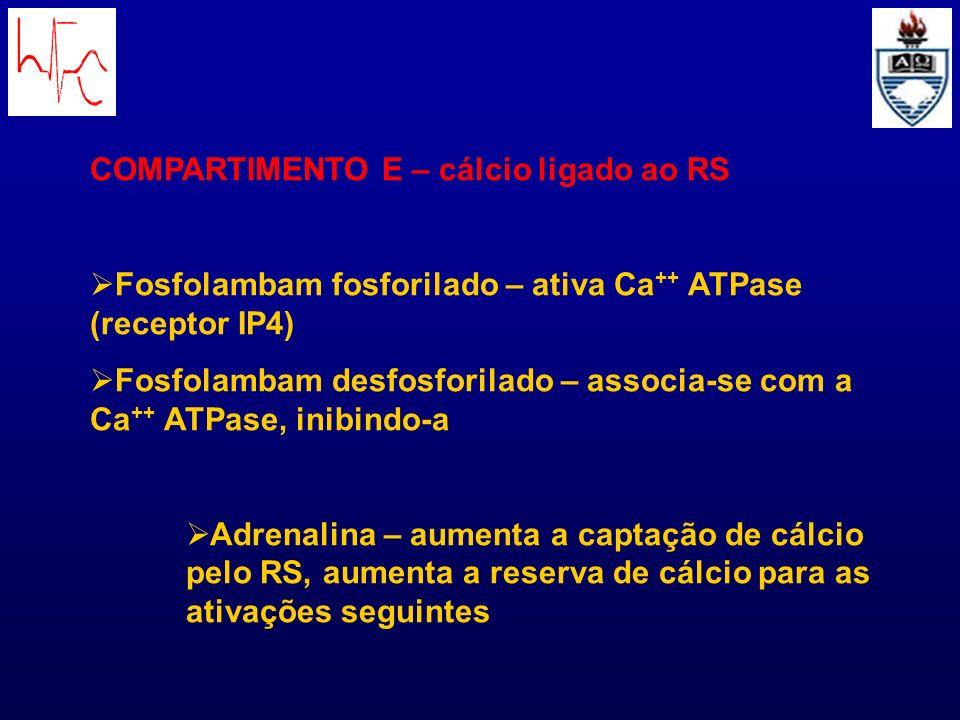 COMPARTIMENTO E – cálcio ligado ao RS