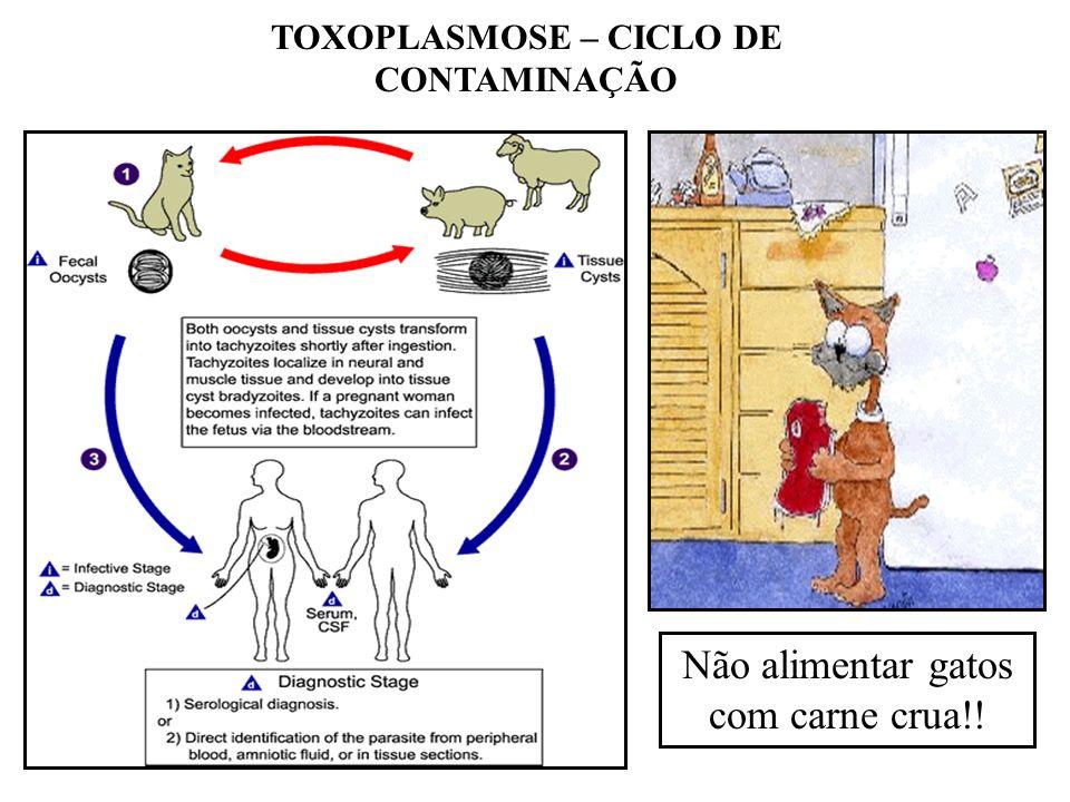 TOXOPLASMOSE – CICLO DE CONTAMINAÇÃO