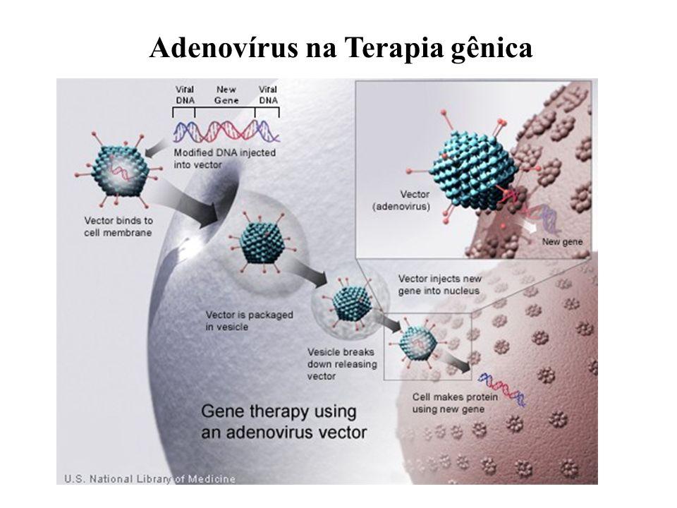 Adenovírus na Terapia gênica