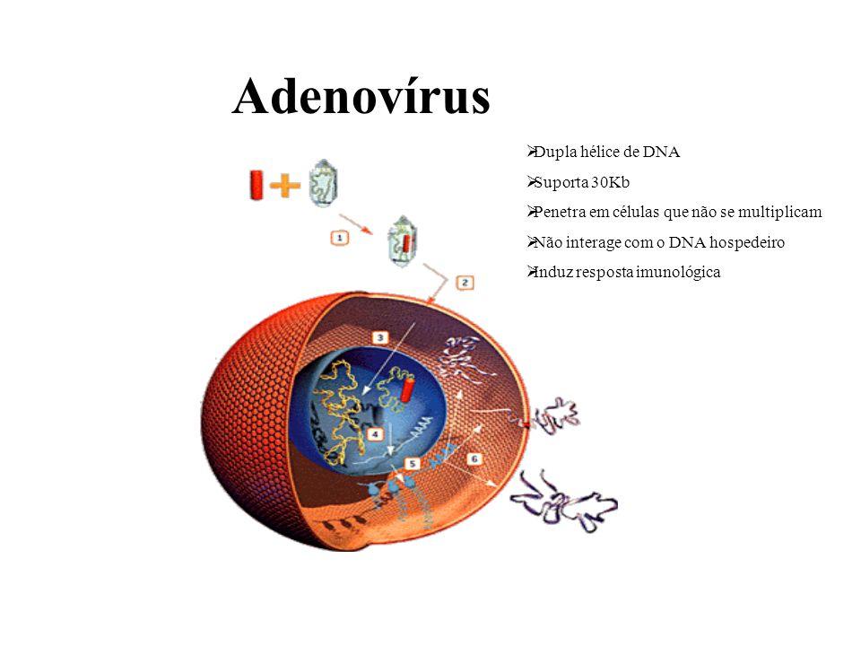 Adenovírus Dupla hélice de DNA Suporta 30Kb