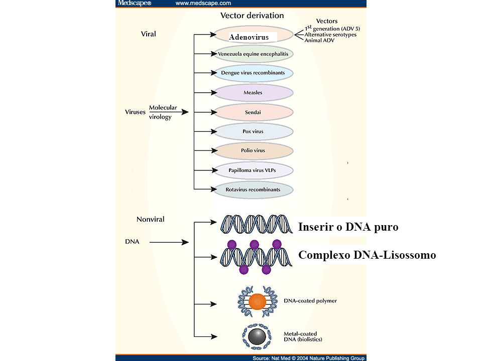Complexo DNA-Lisossomo