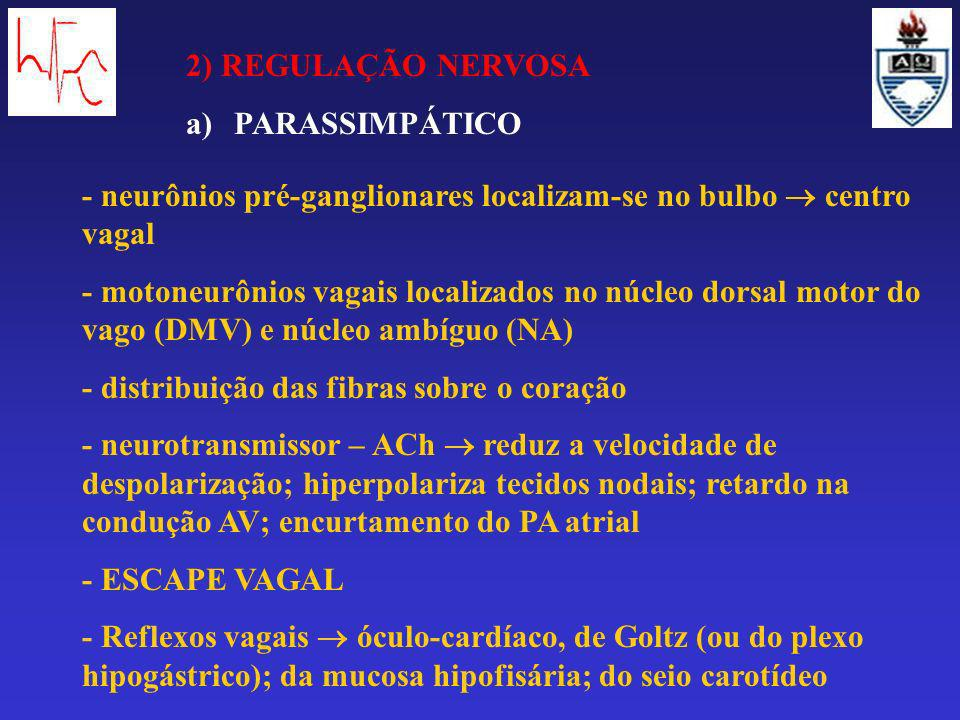2) REGULAÇÃO NERVOSA PARASSIMPÁTICO. - neurônios pré-ganglionares localizam-se no bulbo  centro vagal.