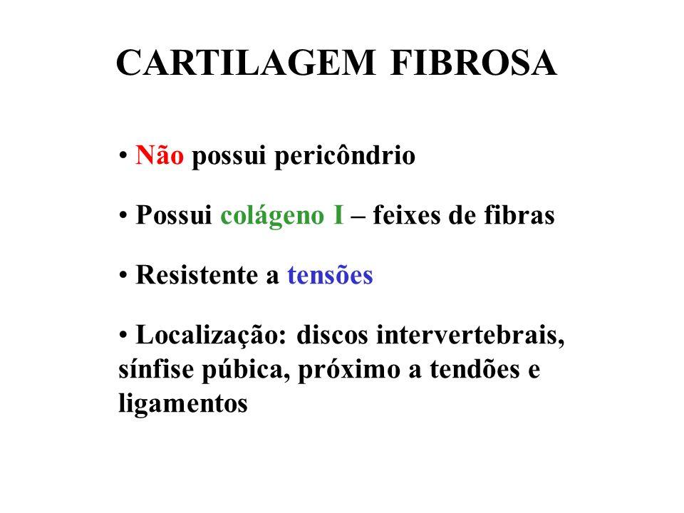 CARTILAGEM FIBROSA Não possui pericôndrio