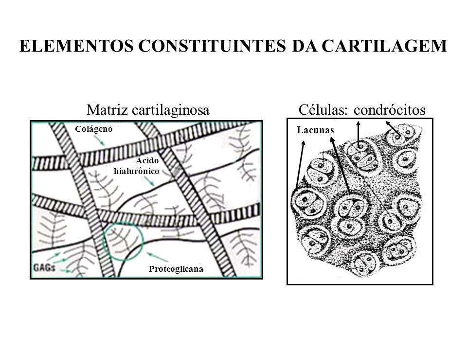 ELEMENTOS CONSTITUINTES DA CARTILAGEM