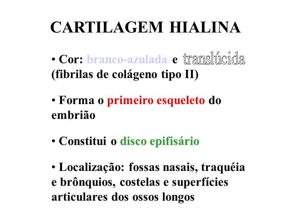 CARTILAGEM HIALINA Cor: branco-azulada e (fibrilas de colágeno tipo II) Forma o primeiro esqueleto do embrião.