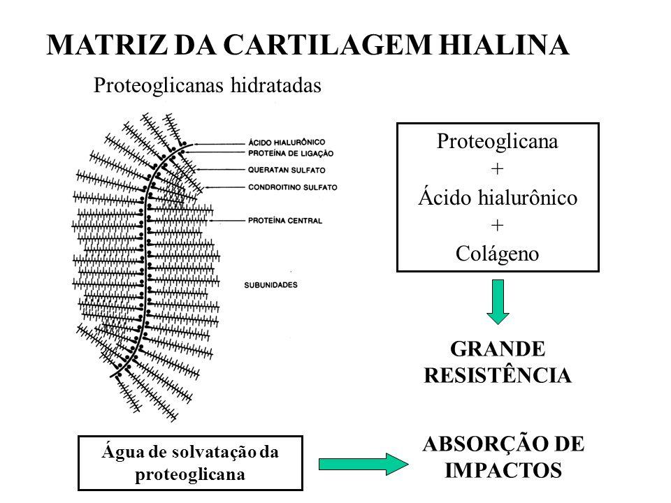 Água de solvatação da proteoglicana