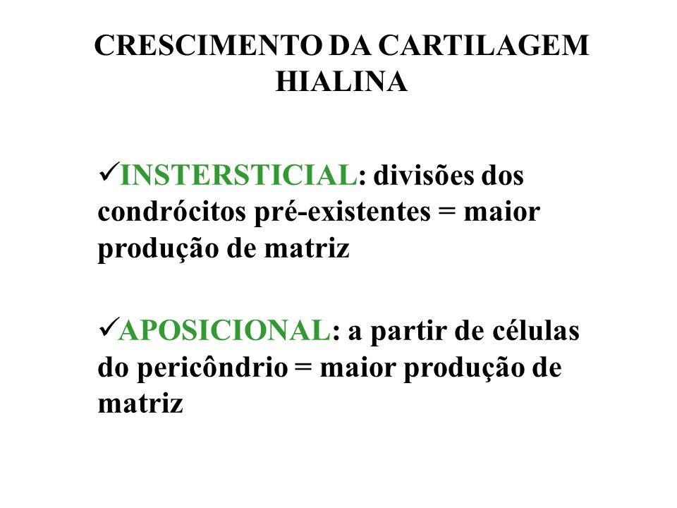 CRESCIMENTO DA CARTILAGEM HIALINA