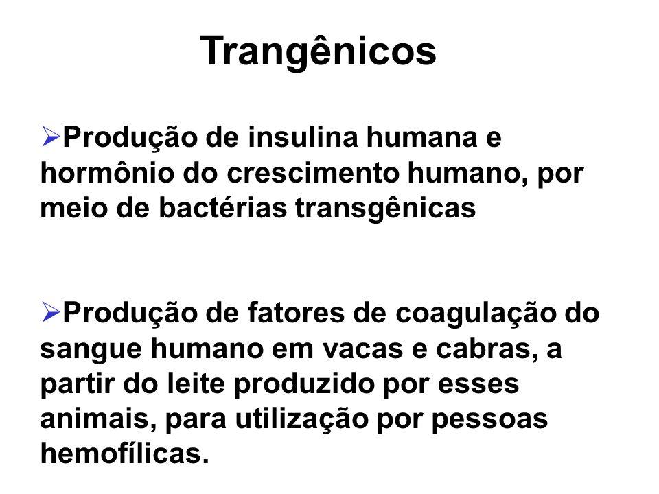 Trangênicos Produção de insulina humana e hormônio do crescimento humano, por meio de bactérias transgênicas.