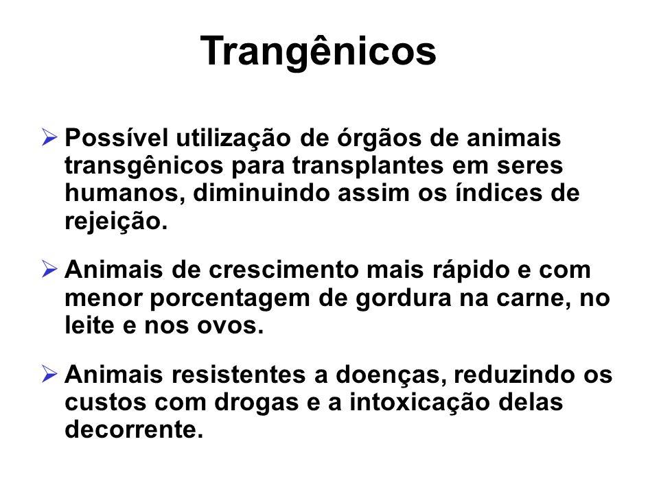 Trangênicos Possível utilização de órgãos de animais transgênicos para transplantes em seres humanos, diminuindo assim os índices de rejeição.