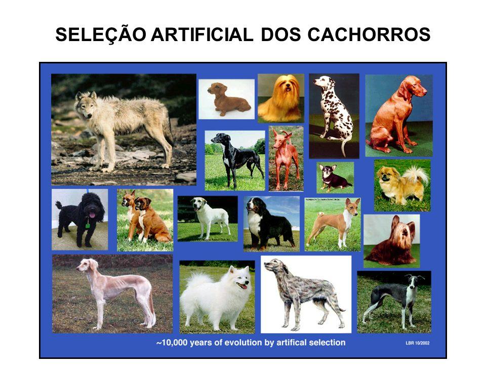 SELEÇÃO ARTIFICIAL DOS CACHORROS