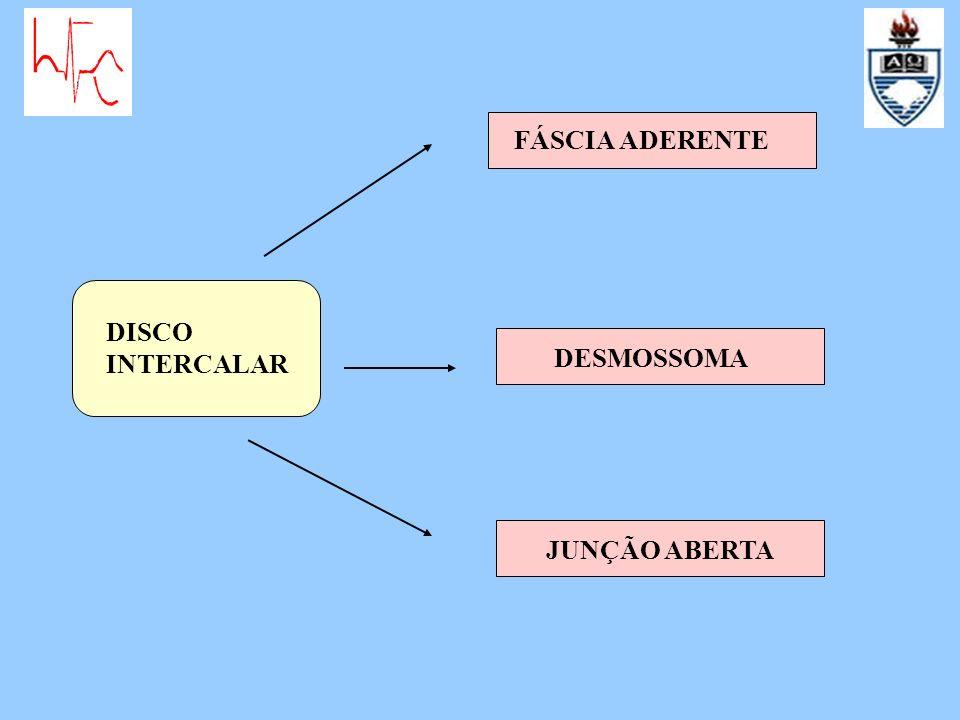FÁSCIA ADERENTE DISCO INTERCALAR DESMOSSOMA JUNÇÃO ABERTA