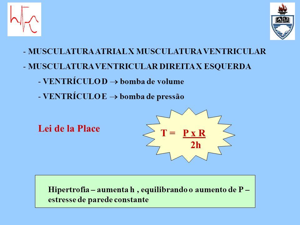 MUSCULATURA ATRIAL X MUSCULATURA VENTRICULAR