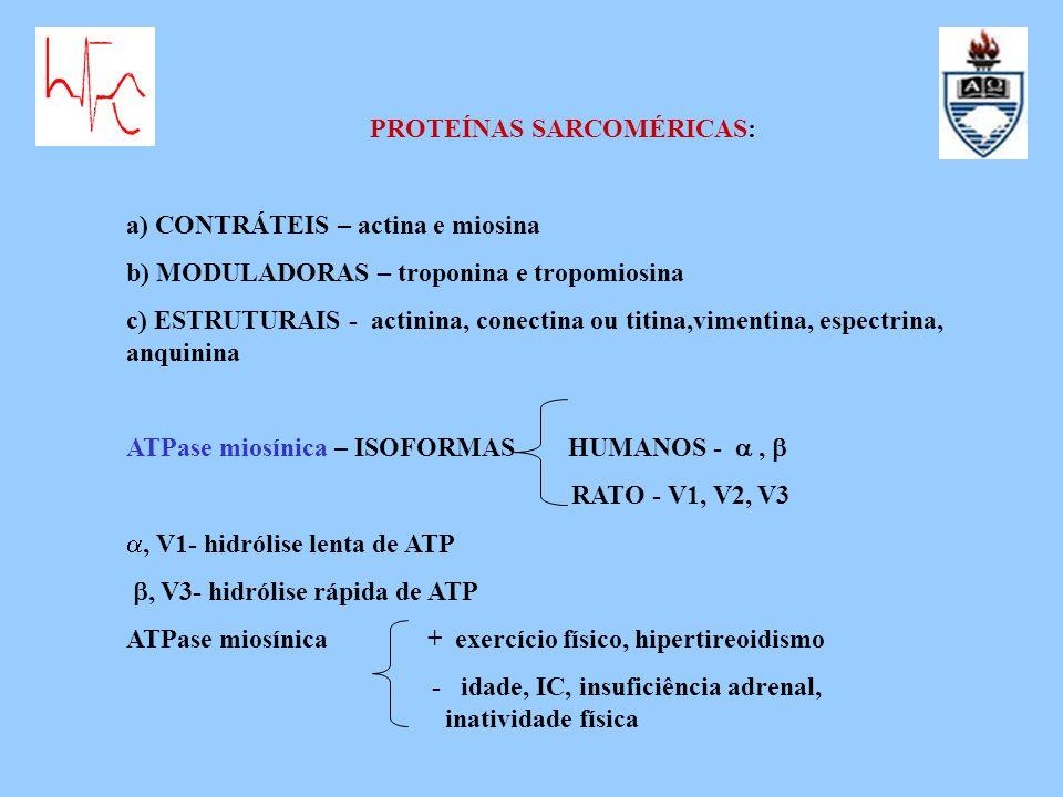 PROTEÍNAS SARCOMÉRICAS:
