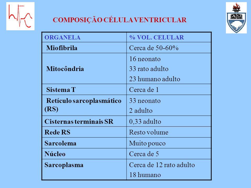 COMPOSIÇÃO CÉLULA VENTRICULAR Miofibrila Cerca de 50-60% Mitocôndria