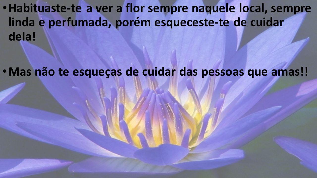 Habituaste-te a ver a flor sempre naquele local, sempre linda e perfumada, porém esqueceste-te de cuidar dela!