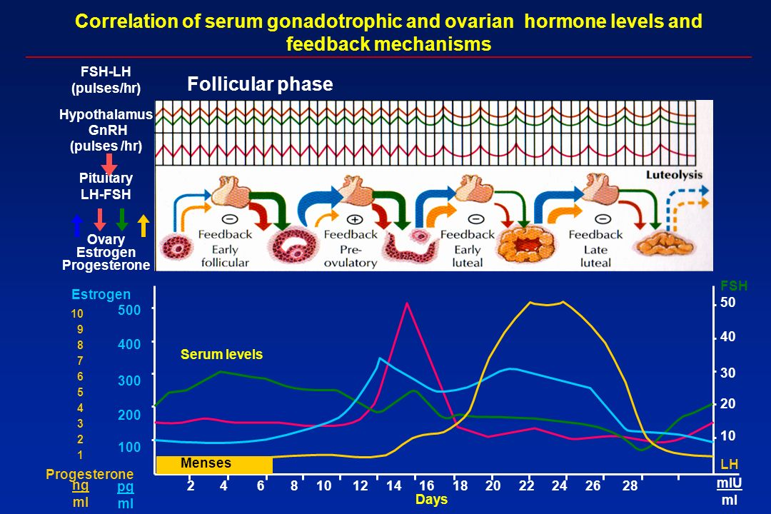 Correlation of serum gonadotrophic and ovarian hormone levels and feedback mechanisms