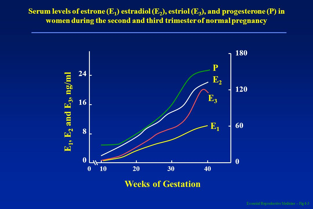 P E2 E1, E2 and E3, ng/ml E3 E1 Weeks of Gestation