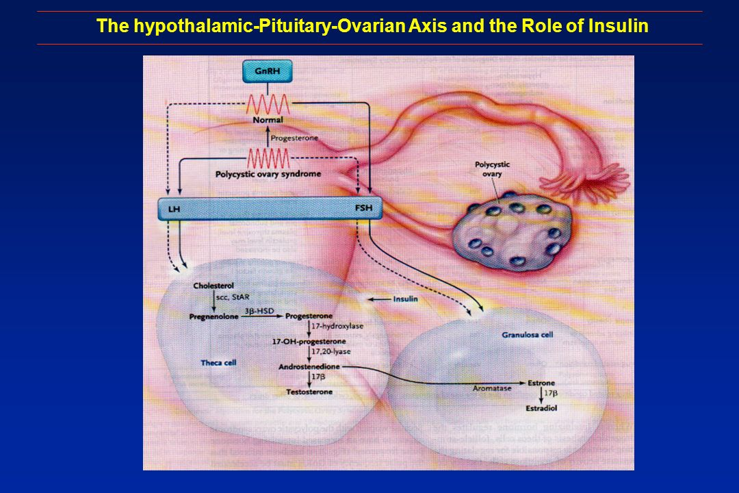 The hypothalamic-Pituitary-Ovarian Axis and the Role of Insulin