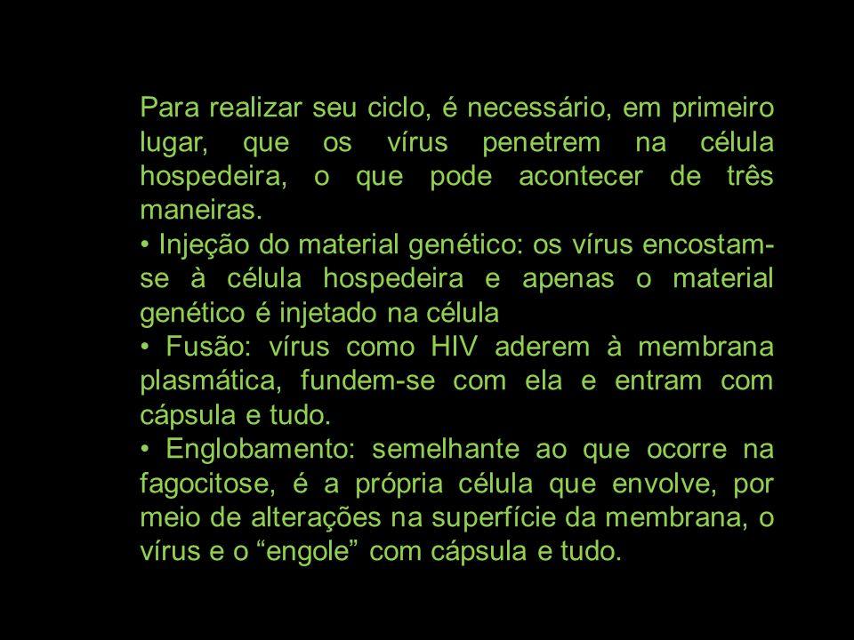 Para realizar seu ciclo, é necessário, em primeiro lugar, que os vírus penetrem na célula hospedeira, o que pode acontecer de três maneiras.