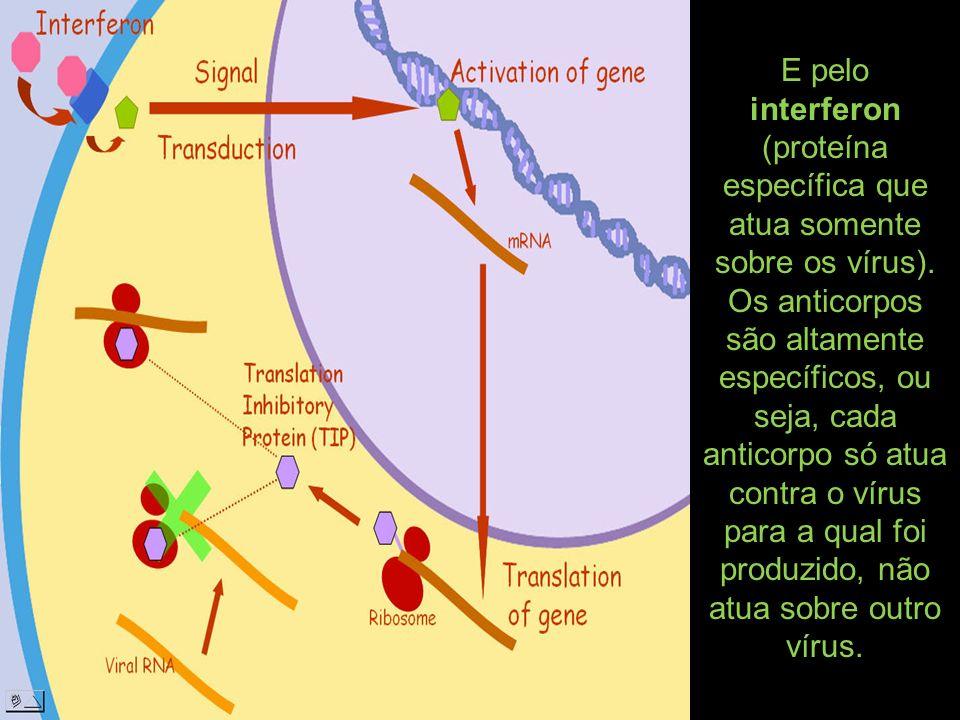 E pelo interferon (proteína específica que atua somente sobre os vírus).