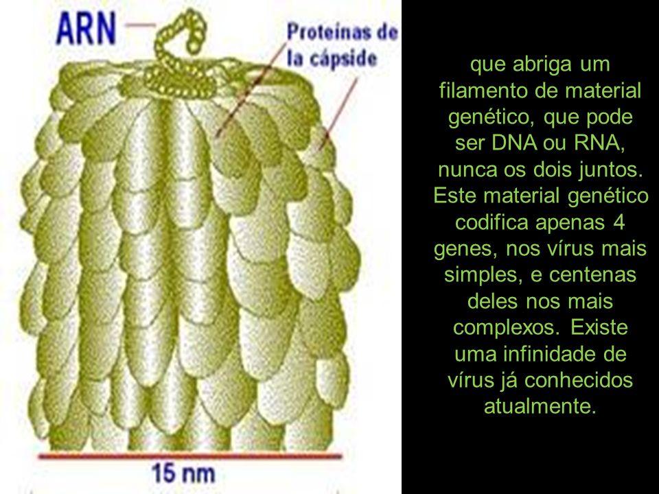 que abriga um filamento de material genético, que pode ser DNA ou RNA, nunca os dois juntos.