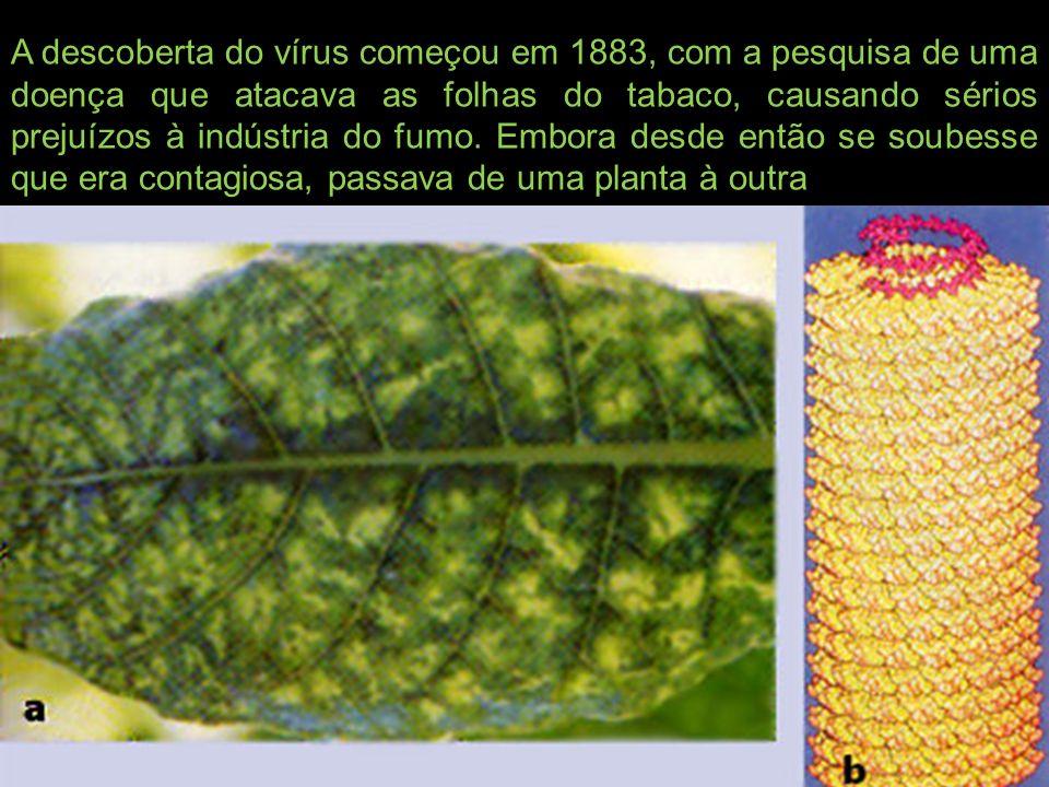 A descoberta do vírus começou em 1883, com a pesquisa de uma doença que atacava as folhas do tabaco, causando sérios prejuízos à indústria do fumo.