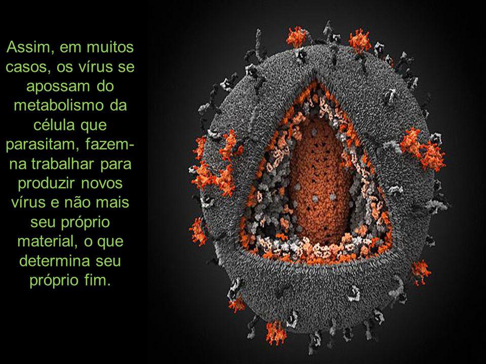 Assim, em muitos casos, os vírus se apossam do metabolismo da célula que parasitam, fazem-na trabalhar para produzir novos vírus e não mais seu próprio material, o que determina seu próprio fim.