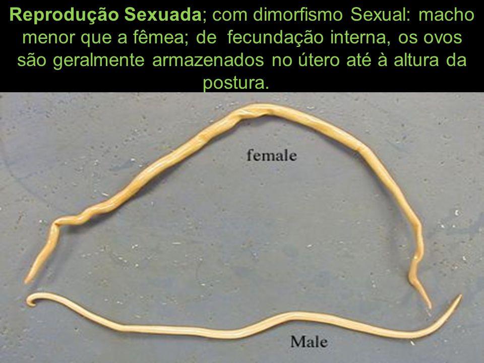 Reprodução Sexuada; com dimorfismo Sexual: macho menor que a fêmea; de fecundação interna, os ovos são geralmente armazenados no útero até à altura da postura.