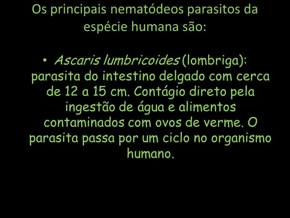 Os principais nematódeos parasitos da espécie humana são:
