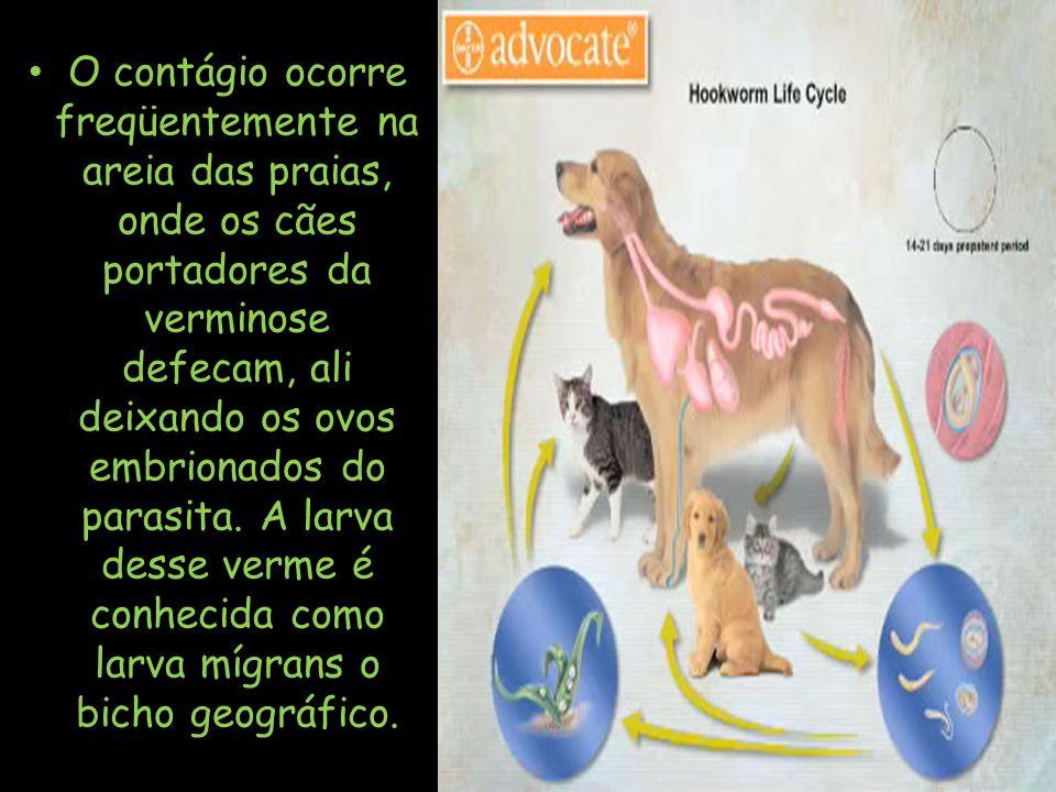 O contágio ocorre freqüentemente na areia das praias, onde os cães portadores da verminose defecam, ali deixando os ovos embrionados do parasita.