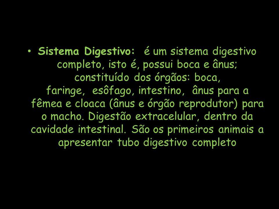Sistema Digestivo: é um sistema digestivo completo, isto é, possui boca e ânus; constituído dos órgãos: boca, faringe, esôfago, intestino, ânus para a fêmea e cloaca (ânus e órgão reprodutor) para o macho.
