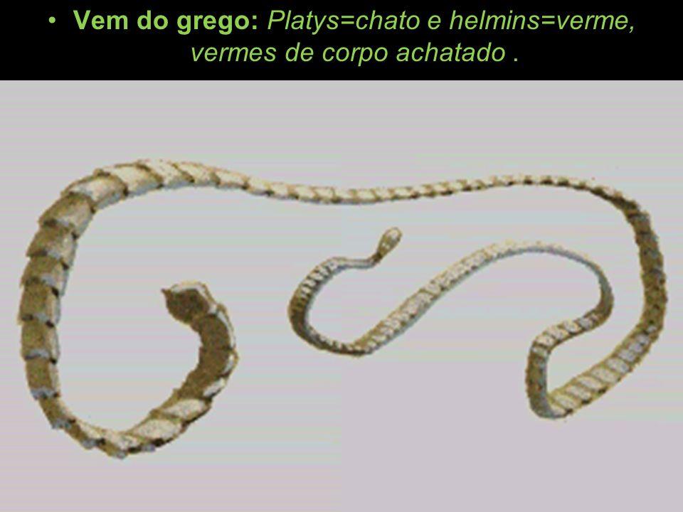 Vem do grego: Platys=chato e helmins=verme, vermes de corpo achatado .
