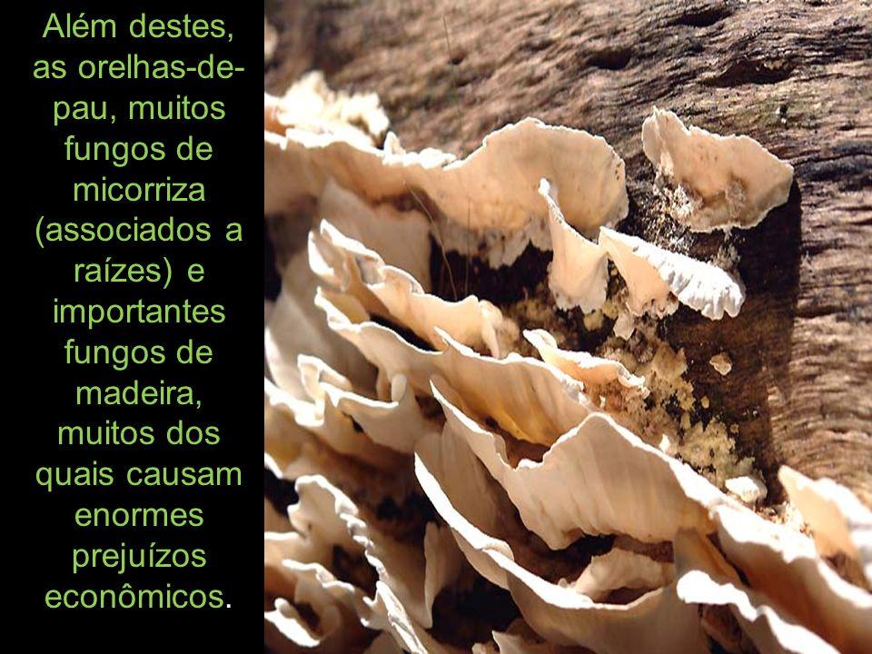 Além destes, as orelhas-de-pau, muitos fungos de micorriza (associados a raízes) e importantes fungos de madeira, muitos dos quais causam enormes prejuízos econômicos.