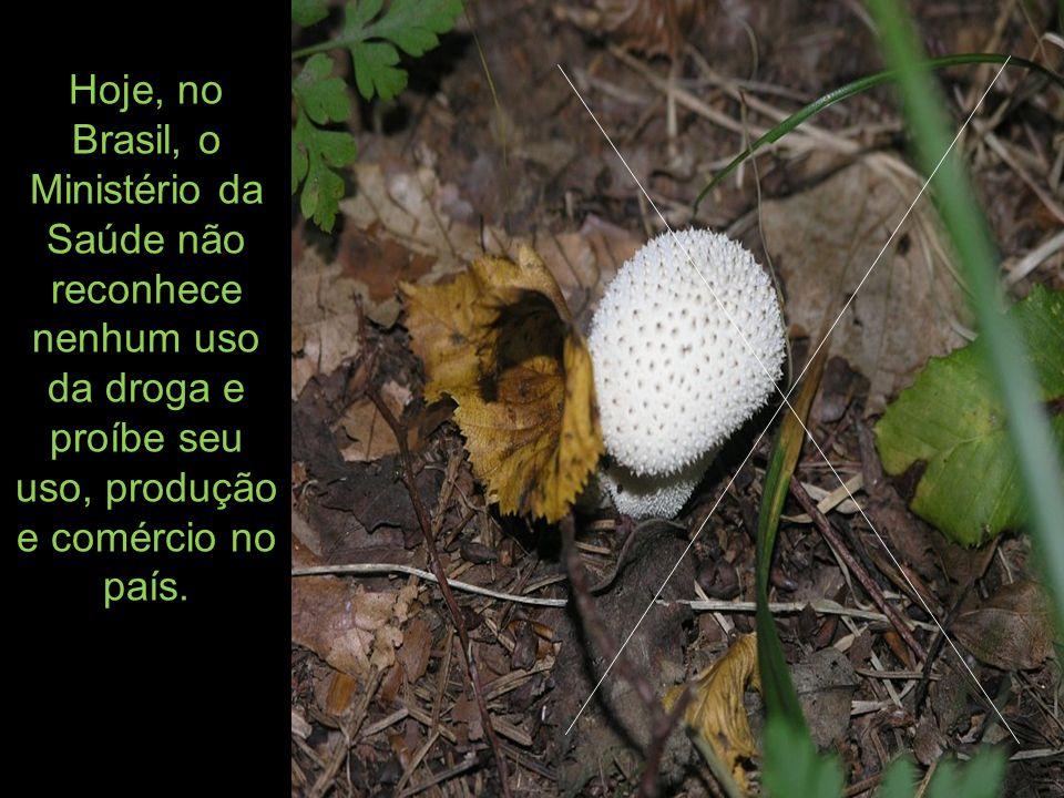 Hoje, no Brasil, o Ministério da Saúde não reconhece nenhum uso da droga e proíbe seu uso, produção e comércio no país.