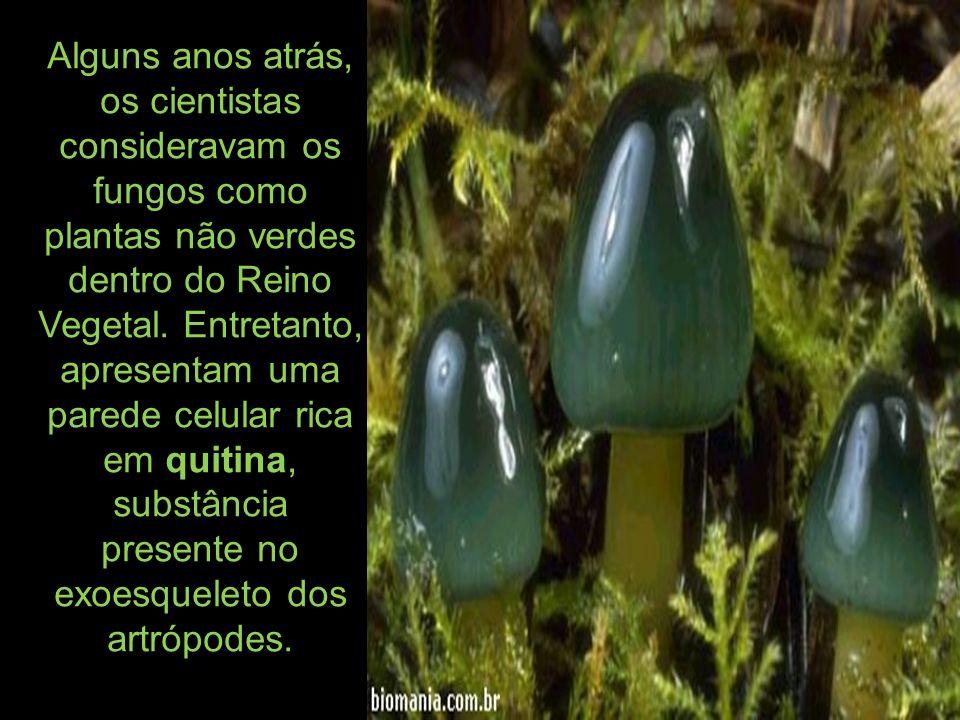 Alguns anos atrás, os cientistas consideravam os fungos como plantas não verdes dentro do Reino Vegetal.