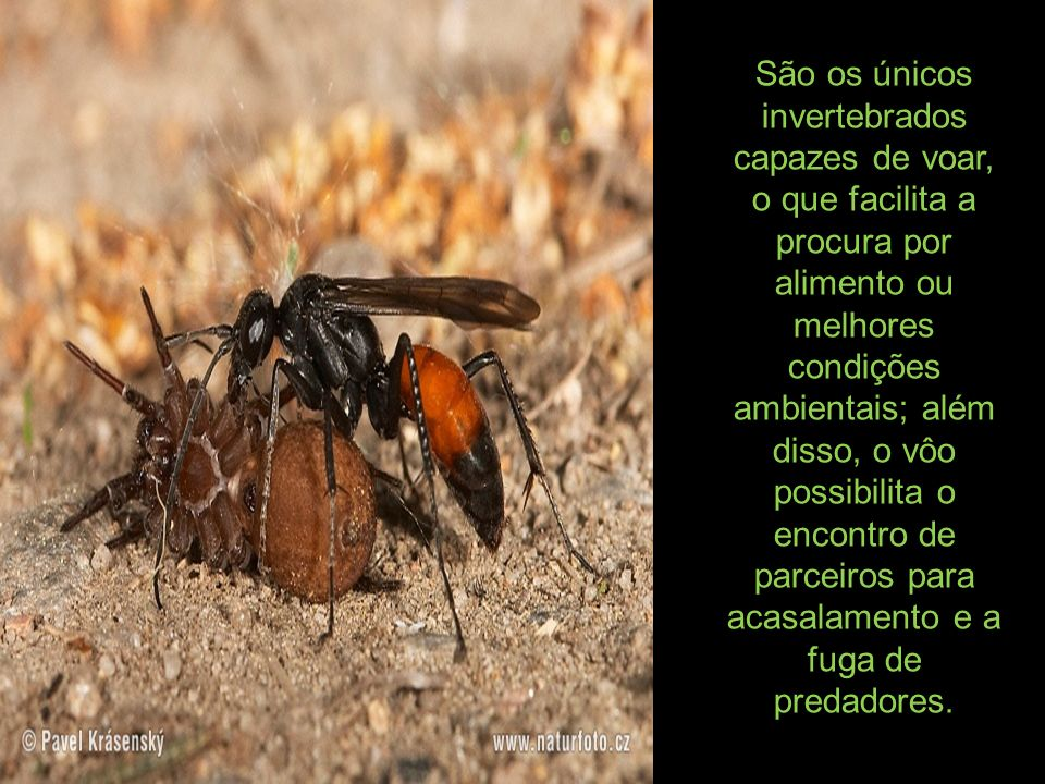 São os únicos invertebrados capazes de voar, o que facilita a procura por alimento ou melhores condições ambientais; além disso, o vôo possibilita o encontro de parceiros para acasalamento e a fuga de predadores.