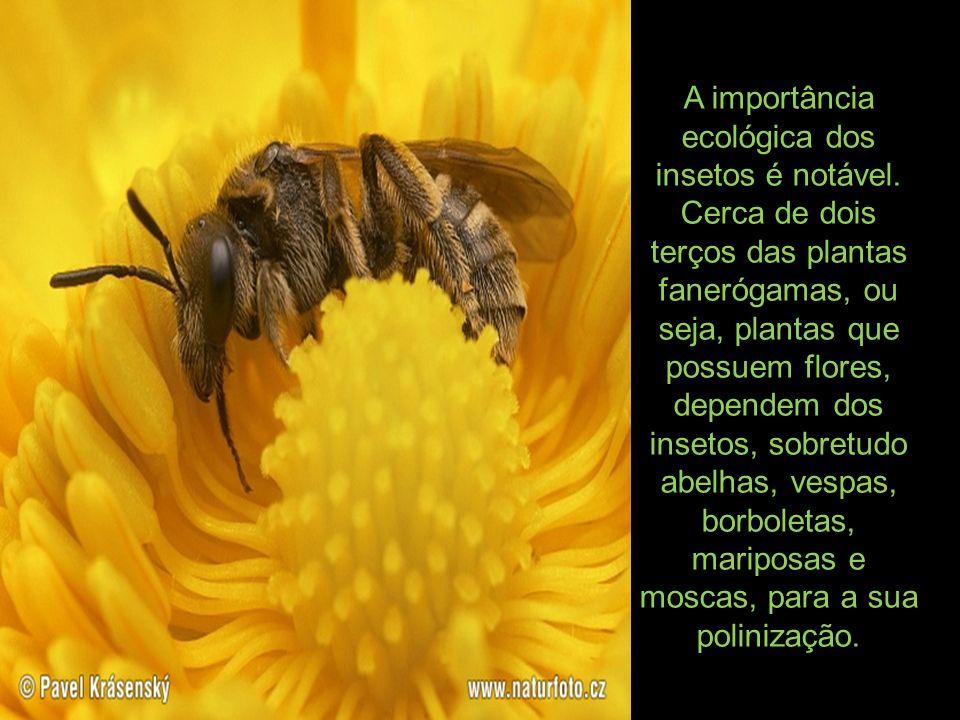 A importância ecológica dos insetos é notável
