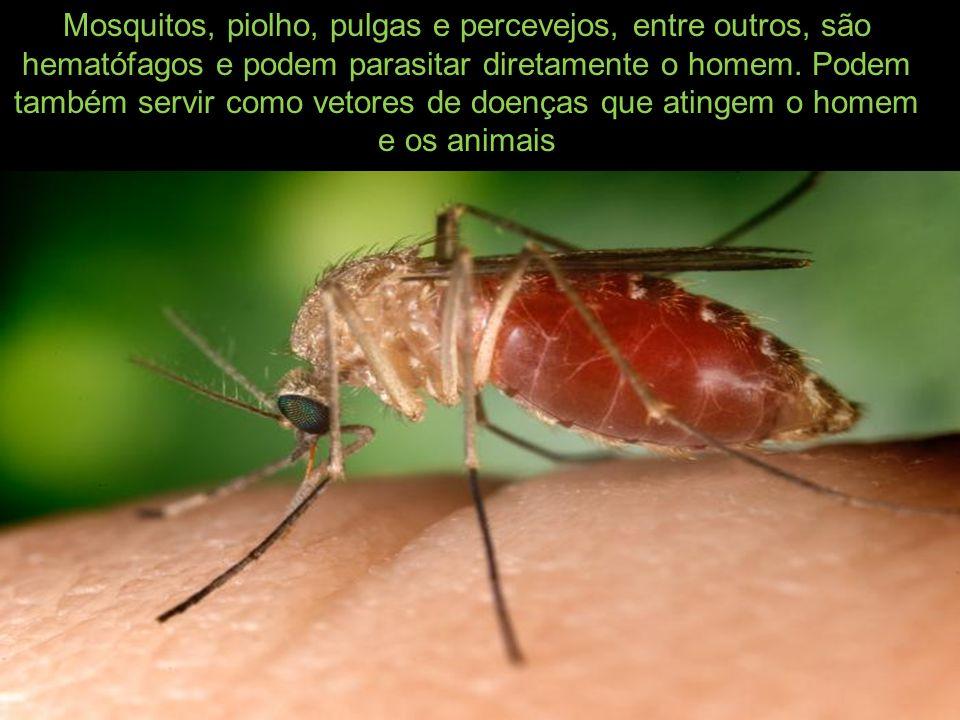 Mosquitos, piolho, pulgas e percevejos, entre outros, são hematófagos e podem parasitar diretamente o homem.
