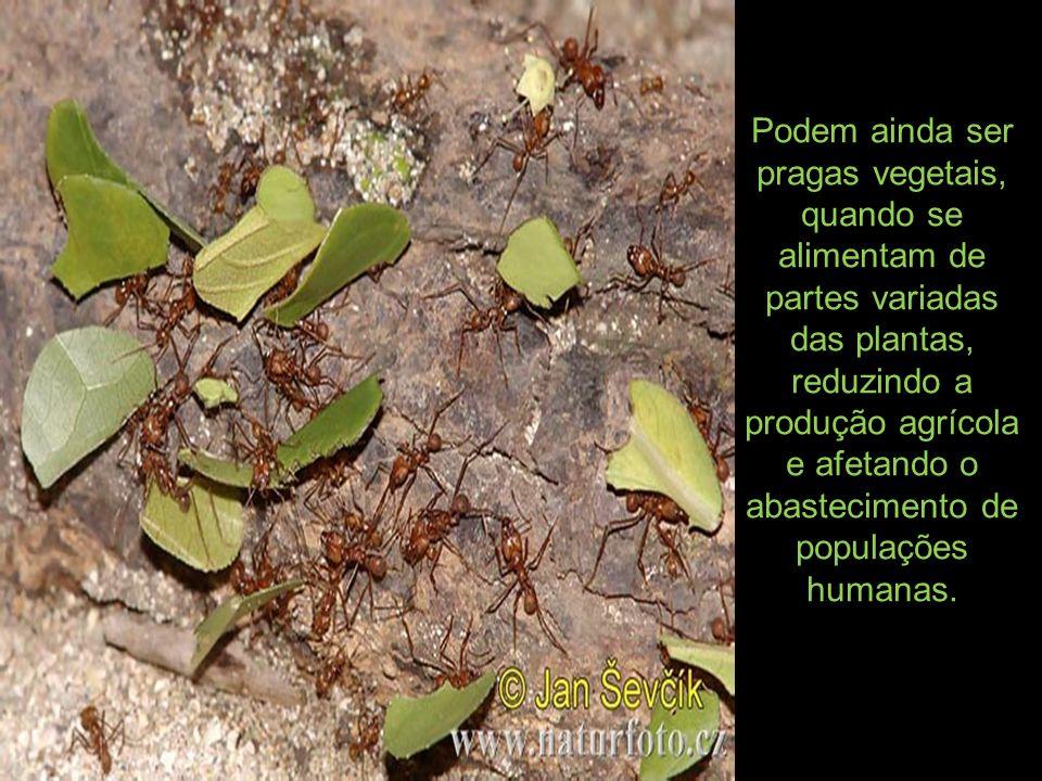 Podem ainda ser pragas vegetais, quando se alimentam de partes variadas das plantas, reduzindo a produção agrícola e afetando o abastecimento de populações humanas.