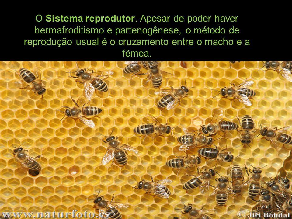 O Sistema reprodutor.