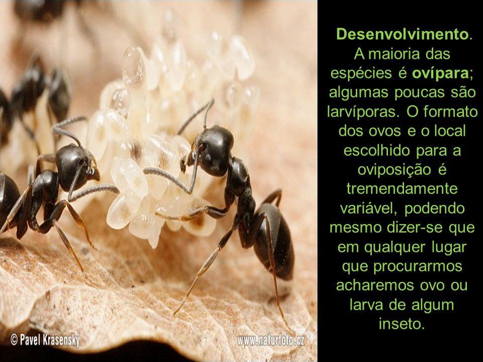 Desenvolvimento. A maioria das espécies é ovípara; algumas poucas são larvíporas.